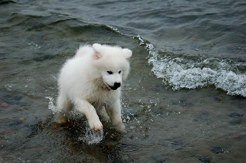 Zack på stranden