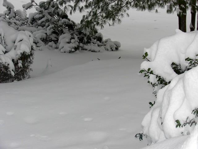 pillow snow 7