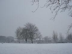 snow day (Jan 2009) - 18