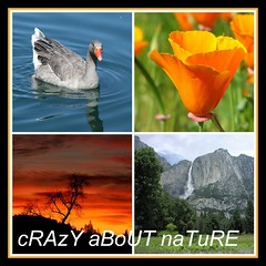 cRAzY aBoUT naTuRE