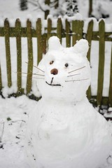Snow Cat von David Tett