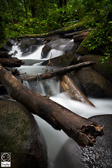 Peaceful Falls (Yoann Rigolleau ( busy , busy )) Tags: wood longexposure light color green nature rock photoshop canon wonderful landscape photo waterfall aperture eau vert canon5d fabulous paysage cascade liquid arbre chute fals guyane younglings 973 roura singhray leefilter fourgassi