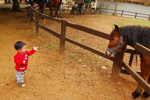 小孩與老馬的對話