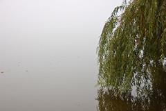 DSC_1562 (mdpayne) Tags: fall boston ma picis october2007