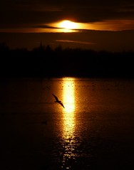 Pennington Flash (martin.roberts32) Tags: uk sunset england leigh penningtonflash pennington bss awesomeshot sunsetoverwater mywinners martinroberts flickraward tz5 natureandnothingelse panasoniclumixtz5