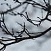 Leafless Branches In The Rain