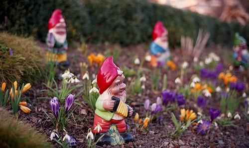 Zwerge im Frühling