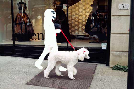 poodle walker