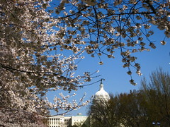 Capitol and Blossoms