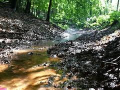 Bach im Wald mit Farn (Grebein) Tags: im mit bach wald farn