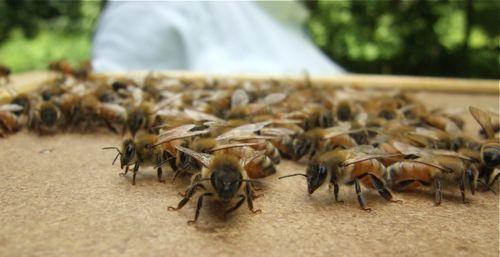 jet bees