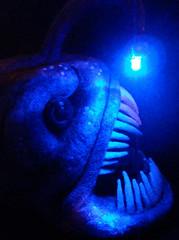Angler Fish 3