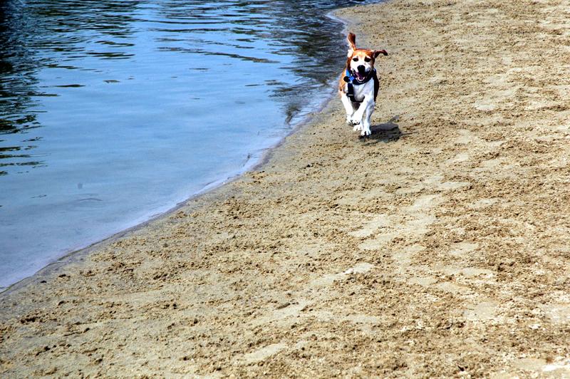 Ivor Running on the Beach