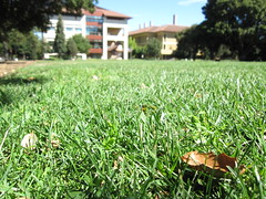 Lawn field