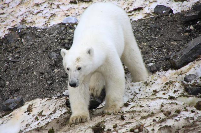 Ártico 2009.20