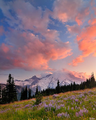 Clearing Storm (Michael Bollino) Tags: flowers sunset cloud mountain nature landscape outside volcano washington nikon break searchthebest sundown northwest meadow mount rainier thunderstorm d300 michaelbollino