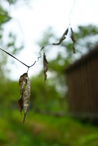 秋荷。柔軟的建築與堅強的落葉