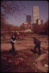 """""""City Farmers"""" Tend Their Gardens in the Fenway Administered by the Fenway Civic Association. Four Hundred Twenty-Five Gardens Are Tilled on These Five Acres in Metropolitan Boston 04/1973"""