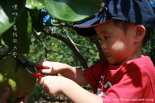 20090913_FruitPicking_060.JPG f