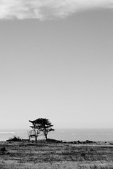One down... (nosha) Tags: california park summer sky beach nature beautiful beauty landscape coast nikon pattern august f11 2009 ano nuevo anonuevo lightroom 70mm blackmagic nosha 0ev 18200mmf3556 11000sec nikond300 summer2009 californiaoregon2009 11000secatf11