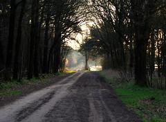 and then...let there be light (pharzing) Tags: light sun sunlight holland nature colors dutch landscape licht bomen nikon forrest nederland natuur zon drenthe landschap tegenlicht zonlicht naturesfinest nikond80 dutchnature