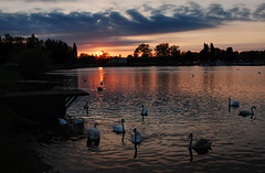 Swans At Sunset.... (Wire_cat) Tags: sunset sky water colours ngc swans blueribbonwinner greatbilling billingmill wirecat billingmillpub