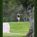 Torneo de golf Bodegas Murviedro