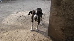 Puppeh waiting for Food (Monkey_Mac) Tags: belize ambergriscaye floraandfauna bacalarchico