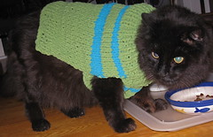 """I hate having to model dog sweaters!"""