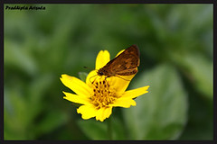 The Butterfly (juzz_arisuta) Tags: flower butterfly natures naturesfinest