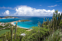 Divi Divi (Fabi Fliervoet) Tags: pictures island saintmartin photos fb stock panoramic stmartin tropical caribbean bays stmaarten sxm coasts cactii sintmaarten netherlandsantilles philipsburg waterscapes saintmaarten clearwaters fabifliervoet