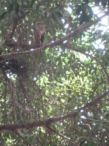 An owl was spotted in the school courtyard.