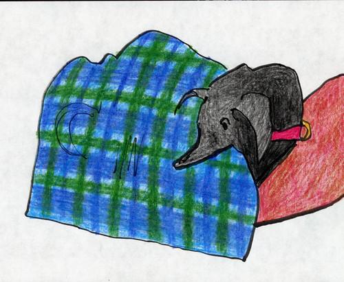 sasha's blanket