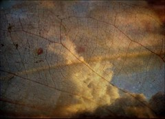 NOCTURNE (getolina) Tags: sky texture collage clouds leaf picasa artcafe citrit memoriesbook malinconiamelancholy bypareeerica grungegalaxy 3imagescloudsleaftexture