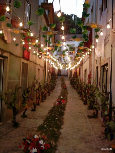 Des vignes ont été placées dans cette rue