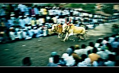 Racing is a matter of spirit not strength - Janet Guthrie (flickrohit) Tags: race bulls cart panning rohit urus rohitgowaikar charholi