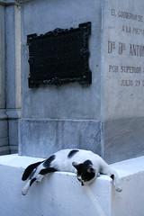Ultima Ratio 7994 (mart-delvalle) Tags: urban cemetery grave animal cat death feline chat cross mort tomb tumba muerte domestic gato crucifix felino panteon coffin spiritual cruces