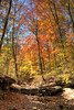 Dry Rock Creek (jrtchris) Tags: ourkentucky
