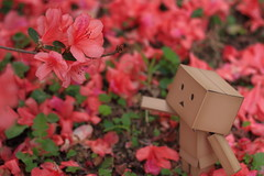 The flowers are so beautiful (darkmoming) Tags: flower figure danbo canonef50mmf18ii  revoltech jfigure danboard