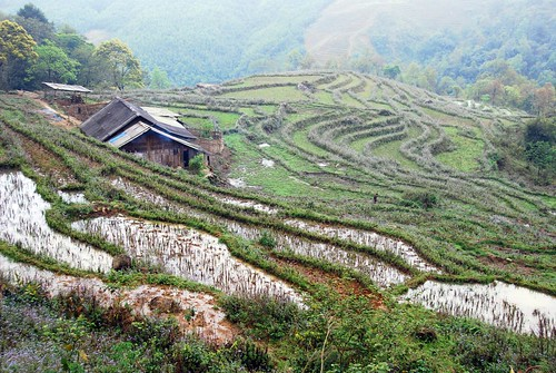 rice terraces, su pan village