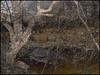 Marsh Melt (Tim Noonan) Tags: light tree art digital photoshop reeds effects march pond manipulation marsh melt mosca treatment darklands vividimagination shockofthenew sotn amazingamateur proudshopper stealingshadows sharingart maxfudge awardtree maxfudgeexcellence maxfudgeawardandexcellencegroup daarklands exoticimage