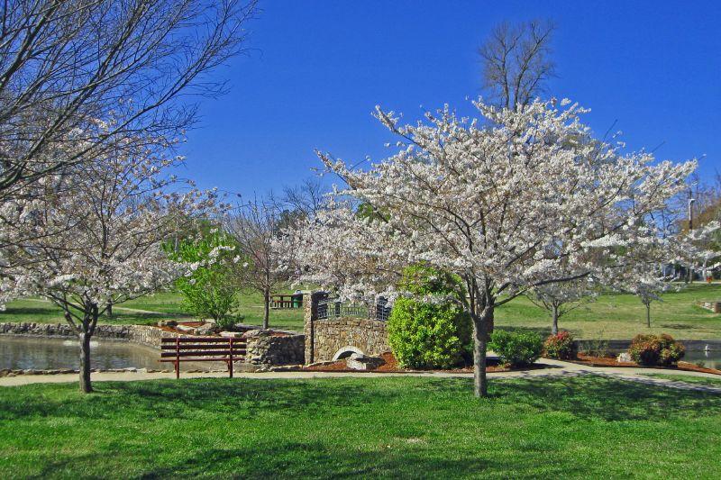 Janssen Park In Spring