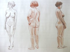 Proportion Studies - Female Model