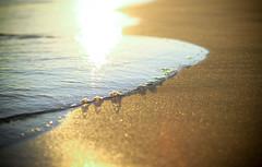 Evelicious (Sandra_R) Tags: sea summer sun beach portugal water canon sand 50mmf14 theperfectphotographer soltróia