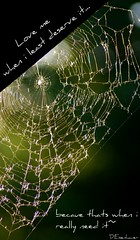 Forgive~ (Ike06~) Tags: love me nikon spiderweb it when need thats really least because deserve d80