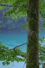 エメラルド色の水面と苔