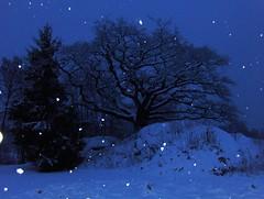 E: The oak. N: Eika (Charlotte Synnve) Tags: winter snow norway night snowflakes fallingsnow oldoak snowybranches tretop