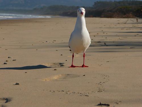Moonee Beach