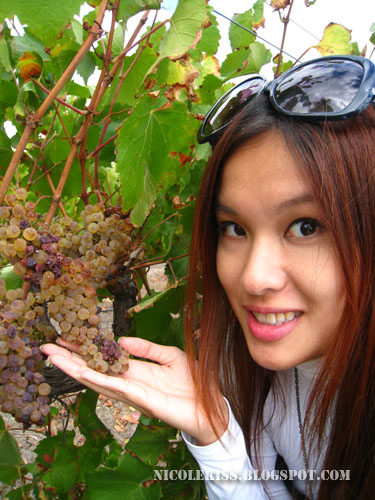 me and grapes on vines close up