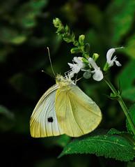 _DSC5333 (pnther60) Tags: backyard roanoke floraandfauna